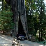 thru_tree